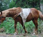 foto di cavallo da tiro,immagine di un cavallo da lavoro da tiro,i cavalli possono essere utilizzati per lavoro,i cavalli trasportano i legnami,il cavallo da tiro è docile e mai stanco,fattorie didattiche scuole nella fattoria