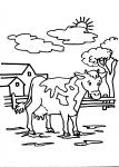 disegno da colorare mucca..disegni da colorare per bambini animali fattoria didattica,compleanno in fattoria didattica,scuole in fattoria,prodotti tipici varesini,agrigelateria