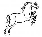 disegno cavallo da coloraredisegno puledro da co