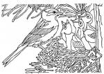 disegno uccellino da colorare..disegno uccello da colorare..nido di uccello da colorare..disegno cincia da colorare..disegno passero da colorare..disegno averla da colorare...disegno pettirosso da colorare