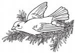 disegno uccellini da colorare..disegno uccello da colorare..disegno uccellino nel nido da colorare..disegno cincia da colorare..disegno piccione da colorare..disegno colomba da colorare..disegno airone da colorare