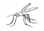 disegno zanzara da colorare..disegno zanzara tigre da colorare..zanzara da colorare gratis..disegno zanzarina con ragnetto da colorare..formichina da colorare..insettino da colorare..scorpione