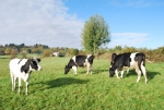 Azienda Agricola di Pasini Renzo,distributore latte fresco a Somma Lombardo,distributore latte crudo a Cassinetta di Biandronno,latte fresco appena munto in fattoria didattica,disegni da colorare di animali della fattoria per bambini gratis