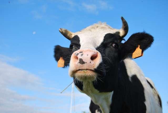 Foto animali fattoria fattoria didattica immagine di for Piani di fattoria con foto