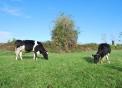 distributore latte fresco alta qualità a cassano magnago in provincia di varese..latte dal distributore di albizzate...latte di mucca della fattoria la bonifica a cassano magnago