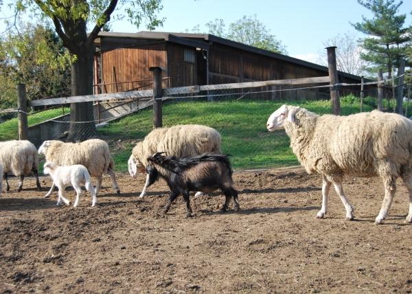 Agriturismo LE BALZARINE a Fagnano Olona