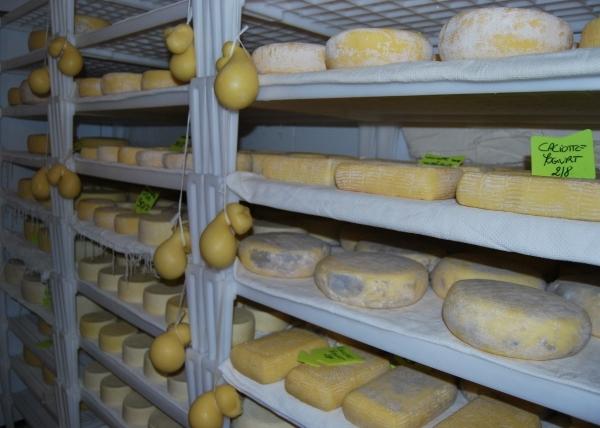 Come si fa il formaggio il latte cosè il latte
