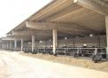 azienda agricola facchi bufale ad oleggio,agrigelateria gelato di bufala in fattoria ad oleggio,mozzarella di bufala ad oleggio,salame di bufala carne di bufala ad oleggio