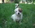 cane il cane da pastore ha sempre aiutato il contadino in fattoria,cane pastore e cane da guardia in fattoria,anche nelle fattorie didattiche ci sono tanti cani il cane è il miglior amico dell'uomo