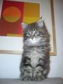 foto di gatto,immagine di gatto..foto di gattini in fattoria..immagine di mucetti con mamma micia a caccia di topi..