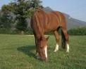foto di mulo..foto di bardotto,immagine di mulo e di bardotto,il mulo che troviamo in fattoria didattica ..immagine mulo da montagna..disegno di bardotto da colorare..mulo da colorare