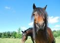 immagine di cavallo foto di un cavallo in una fattoria,nella fattoria didattica abbiamo tanti animali agrigelateria con gelato in fattoria e formaggio dal latte delle nostre mucche