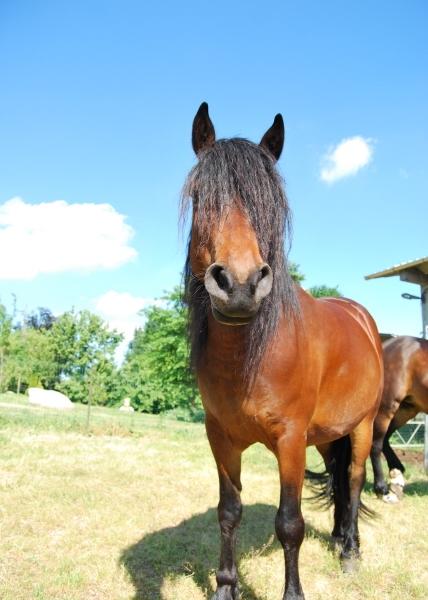Cavallo in fattoria didattica puledro della fattoria stallone for Fattoria immagini da colorare