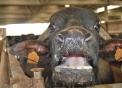 animali in fattoria per bambini,fattorie didattiche con agrigelateria,agriturismi bed & breakfast,disegni da colorare gratis di animali in fattoria per bambini