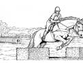 disegno cavallo da colorare..disegno cavallo salta ostacoli da colorare..disegno puledro da colorare..disegno stallone cavallo arabo da colorare
