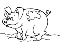 disegno maiale da colorare..disegno porcellino da colorare..disegno maialini da colorare..porco da colorare..suino da colorare