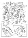disegno barbagianni mentre caccia topi da colorare..disegno rapace da colorare..civetta da colorare..gufo nella notte da colorare