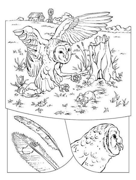 Disegno barbagianni mentre caccia topi da colorare for Disegno pagliaccio da colorare