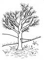 disegno albero da colorare..disegno da colorare per bambini di un albero..disegno pianta nel bosco da colorare..disegno alberi nella foresta da colorare
