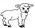 disegno agnello da colorare..disegno agnellino da colorare..pecora da colorare in fattoria..pecorella da colorare..ariete da colorare