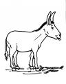disegno equino da colorare..asinello in fattoria da colorare..somaro da colorare..disegno latte d'asina da colorare..ciucco da colorare