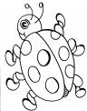 disegno coccinella della fattoria da colorare per bambini..disegno piccola coccinella da colorare..coccinella si posa su fiore da colorare