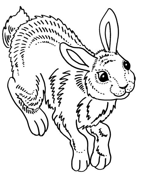 Disegno leprotto da colorare disegno lepre sul prato for Lepre immagini da stampare