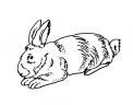 disegno mamma coniglia con coniglietti da colorare..disegno coniglia in fattoria da colorare..disegno di conigli da colorare per bambini