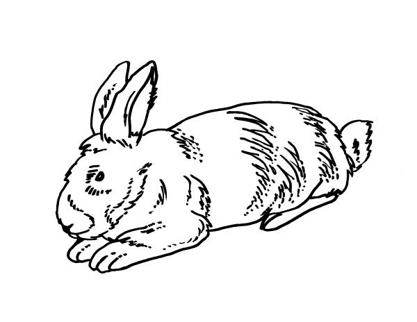 Amato disegno coniglio da colorare,disegno lepre da colorare LC97