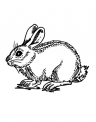 disegno roditori da colorare..disegno coniglietta da colorare..disegno coniglio che salta da colorare per bambini