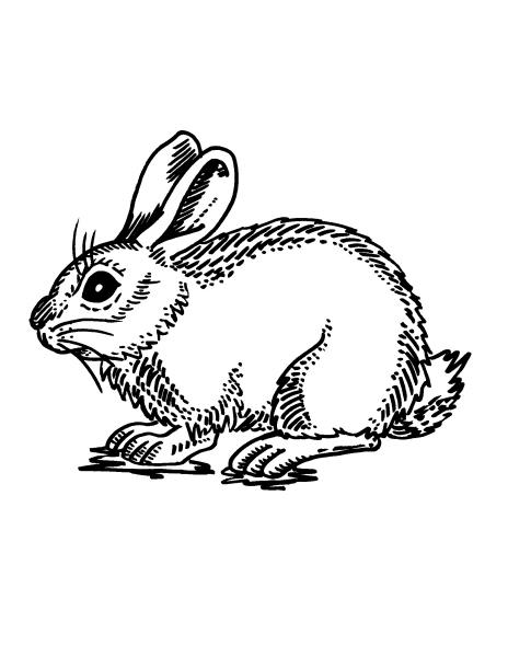 Disegno roditori da colorare disegno coniglietta da for Coniglio disegno per bambini