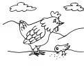 disegno gallina da colorare con pulcino..disegno faraona da colorare per bambini..disegno pulcino da colorare
