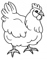 disegno gallina ovaiola da colorare..disegno pavone da colorare..disegno pulcino nell'uovo da colorare