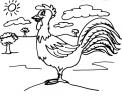 disegno galletto della fattoria da colorare..disegno gallo colorato cresta e piume da colorare..disegno pollo da colorare