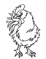 disegno galletto della fattoria didattica da colorare..disegno polla da colorare..disegno emu da colorare..