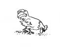 disegno pollaio da colorare..disegno galletto con verme da colorare..disegno colomba da colorare