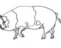 disegno verro da colorare..disegno maschio del maiale da colorare..disegno suino da colorare