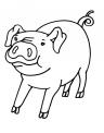 disegno maialino da colorare..disegno maiale della fattoria didattica da colorare
