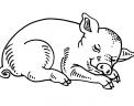 disegno suinetto da colorare..disegno maialino da colorare..disegno porcellino da colorare in fattoria