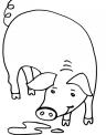 disegno porcellini da colorare..disegno scrofa da colorare..disegno porco da colorare