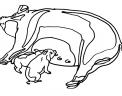 disegno scrofa da colorare disegno mamma maiala con maialini da colorare in fattoria didattica