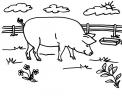 disegno maiale nella porcilaia della fattoria da colorare..disegno pig da colorare..disegno maialino rosa da colorare