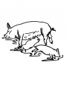 disegno porcellini con mamma porcella da colorare..disegno suino maiale da colorare nella fattoria degli animali