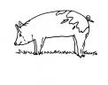 disegno porcellino nella porcilaia della fattoria da colorare..disegno cinghiale nel bosco da colorare