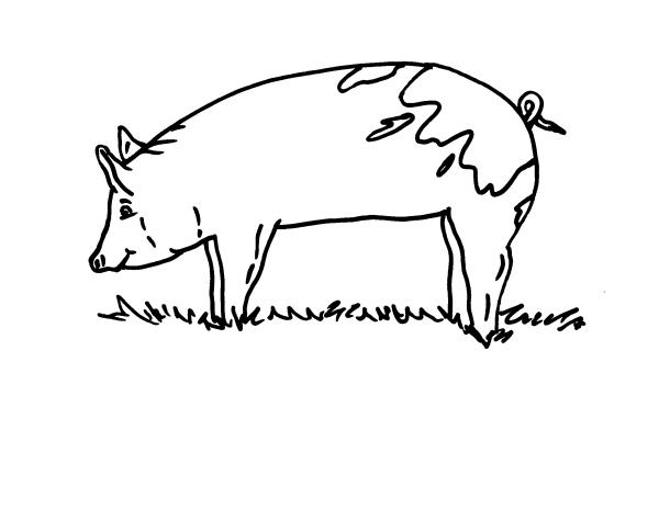 Disegno porcellino nella porcilaia della fattoria da for Disegno della fattoria americana