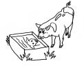 disegno maiale per salami da colorare..disegno porcello da colorare..disegno lattonzoli da colorare