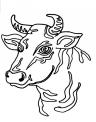 disegno bue da colorare..disegno buoi da colorare..disegno toro della fattoria da colorare