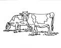 disegno mandria di mucche da colorare..disegno tori e torelli da colorare..disegno manza da colorare