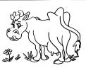 disegno mucca da latte da colorare..disegno vacca razza jersey da colorare..disegno vacca bruna alpina da colorare