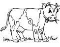 disegno mucca da latte con mammella da colorare..disegno vitello da latte da colorare..disegno manzo da colorare..